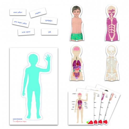 Montessori - Human Body